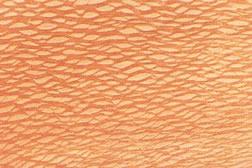 Queensland Silky Oak Timber